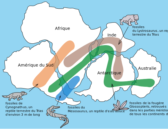 <b>Position des continents il y a 240 millions d'années<br></b><i>Source : Snider-Pellegrini Wegener fossil map fr.svg, par  Osvaldocangaspadilla, Simon Villeneuve (traduction) via wikimedia commons, CC-BY-SA-3.0,2.5,2.0,1.0</i>